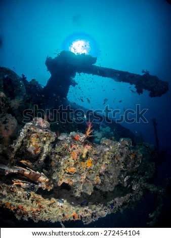 Backward Cannon of British Second World War Vessel, Northern Red Sea, Egypt