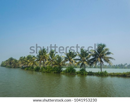 Backwater surrounded by coconut trees