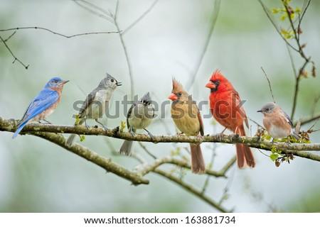 Backyard Birds - stock photo