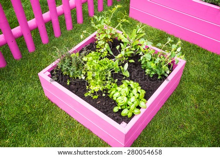 Backyard herb garden. Pink raised beds with herbs and vegetables. Trendy garden design - stock photo