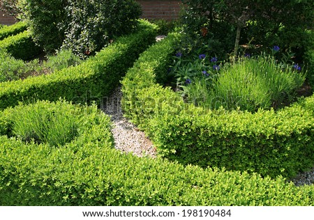 backyard in the Netherlands, trimmed Thuja and Boxwood - stock photo