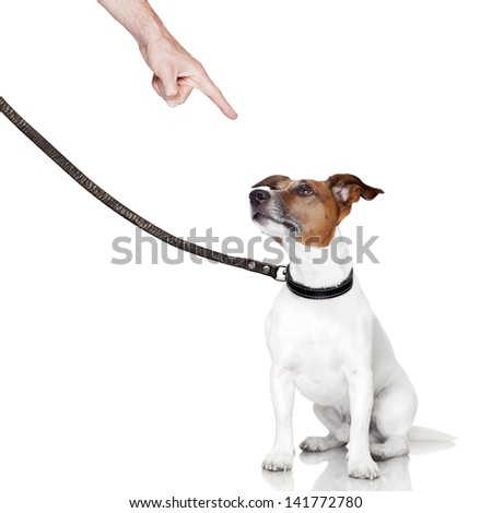 bad behavior dog being punished by owner - stock photo