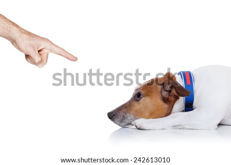 bad behavior dog being punished by owner with finger pointing at him , isolated on white background - stock photo