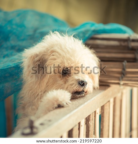 Bad dog in cage - stock photo