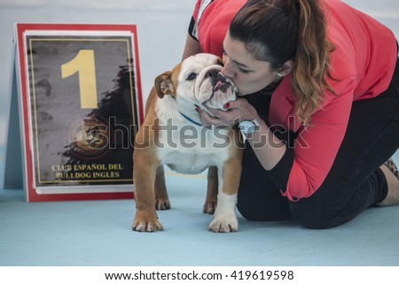 Badajoz, Spain - May 8, 2016: International Exhibition. Woman kissing a winner British Bulldog during the exhibition contest - stock photo