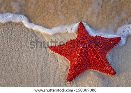 Bahama Starfish on the beach with incoming waves from the ocean. - stock photo