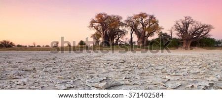 Baines Baobabs - stock photo