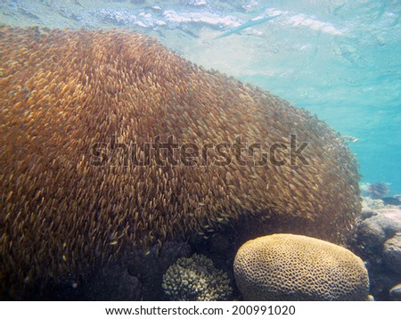 Bait ball under the surface - stock photo
