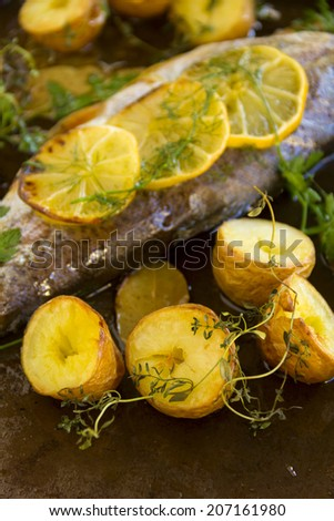 Baked potatoes with slices of baked lemon on delicious rainbow trout fillet with dill. - stock photo