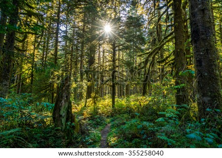 Baker River Trail, Mount Baker, North Cascades - stock photo