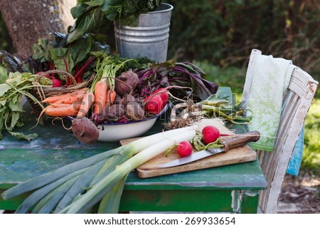 Balanced diet based on raw organic vegetables. Healthy food concept in garden.  - stock photo