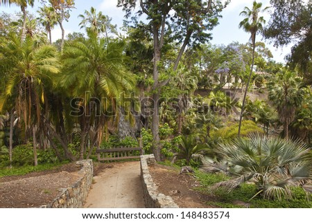 Balboa park gardens tropical jungle in San Diego California. - stock photo