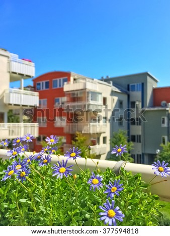 Balcony with blooming blue daises. Modern apartment buildings.