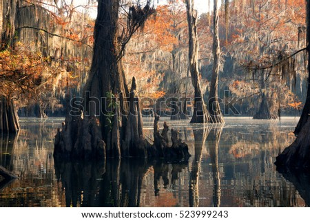 "Bald cypress forest in autumn, showing a ""knees"" and a rusty color foliage. Caddo Lake State Park, Texas, United States"