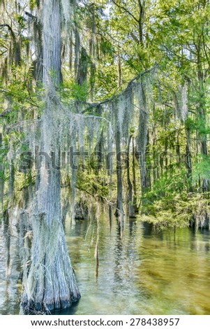 Bald cypress (Taxodium distichum), trees in swamp, Chicot State Park, Louisiana.