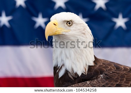 Bald Eagle and the American flag in the background. - stock photo