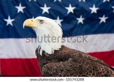Bald Eagle and the American flag in the background.