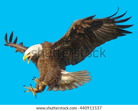 Bald eagle attack hand draw on blue sky background illustration.