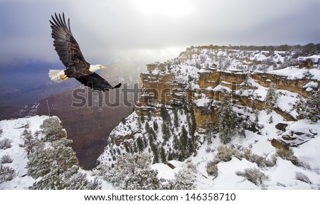 Bald eagle flying above grand canyon - stock photo