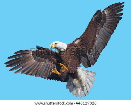how to draw a bald eagle flying