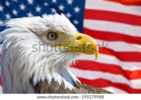 Bald eagle head, american flag