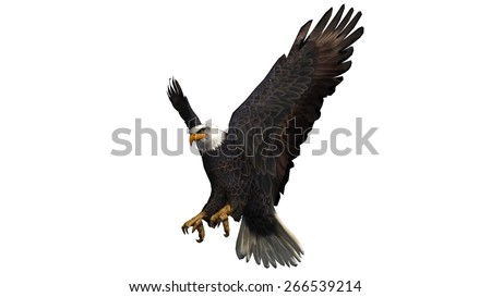 Bald Eagle in fly separated on white background