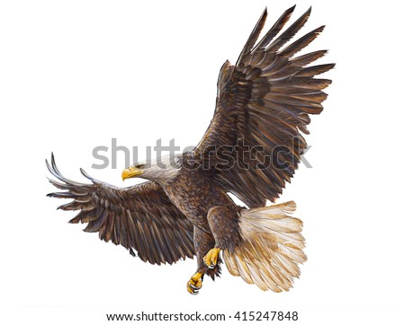 Bald eagle landing on white hand draw and paint illustration. - stock photo