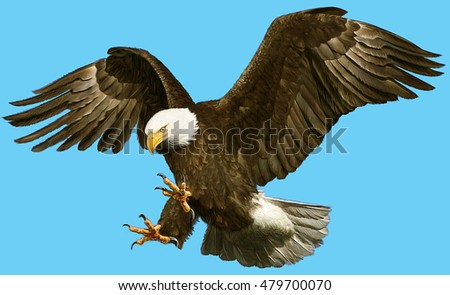 Bald eagle swoop attack hand draw and paint on blue background illustration.