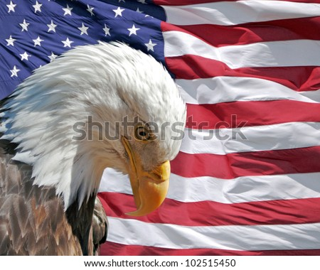 Bald eagle with its head bowed respectfully in front of the flag of the USA - stock photo