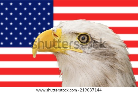 Bald eagle with the american flag in the background