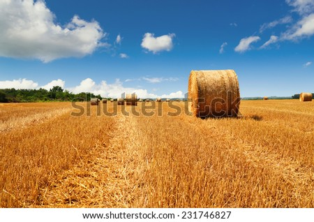 Bale of a straw on harvest field