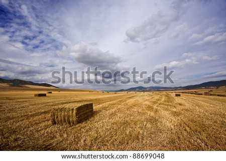 Bale of straw in a yellow landscape.... - stock photo