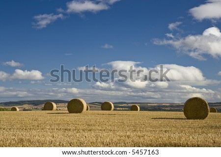 Bales in a stubble field in late afternoon sun.