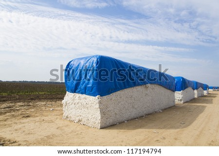 Bales of cotton against cotton field in Arkansas - stock photo