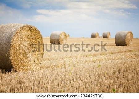 bales of grain after harvesting a wheat field  - stock photo