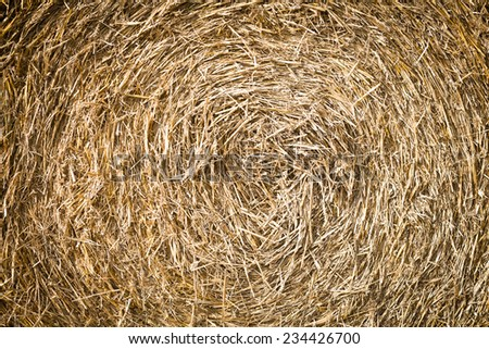 bales of grain after harvesting a wheat field, background - stock photo