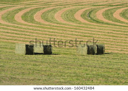 Bales of hay in a field with green and golden stripes. - stock photo