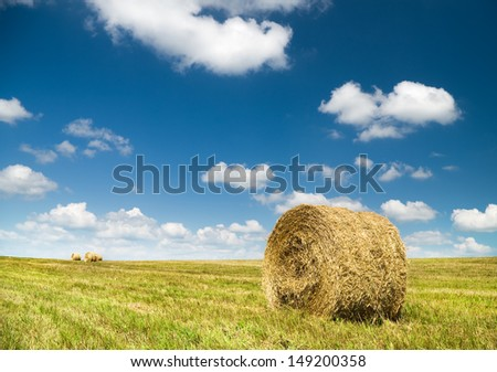 Bales of hay in a large field. Nature composition. - stock photo