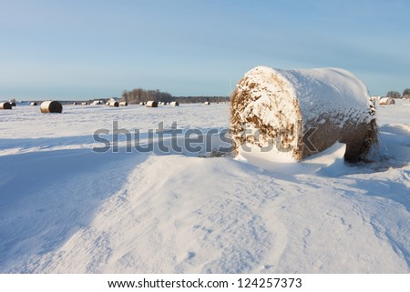 Bales of hay laying in the snow on farm field