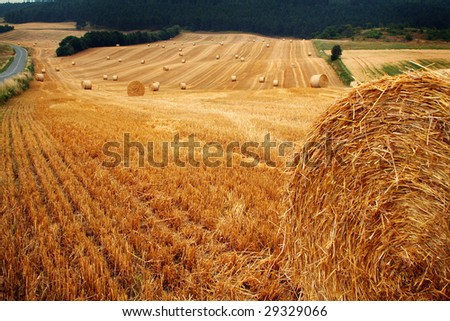 bales of hay or straw. field at harvest with crop cut and pressed - stock photo