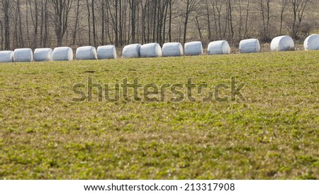 Bales of hay wrapped in white foil, in a row
