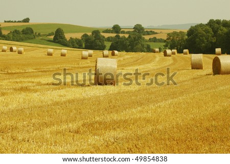 Bales of  straw. Harvesting, autumn.