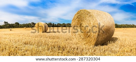 Bales of straw in wheat field. - stock photo