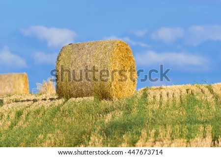 Bales of straw on a cornfield after harvest
