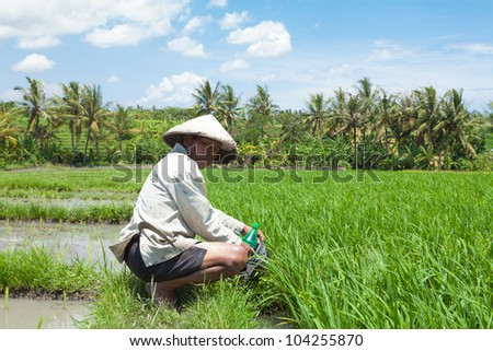 BALI - FEBRUARY 15. Farmer hydrating after hard work in paddy field on February 15, 2012 in Bali, Indonesia. Farmers typically plant Green Revolution rice varieties allowing 3 growing seasons yearly.