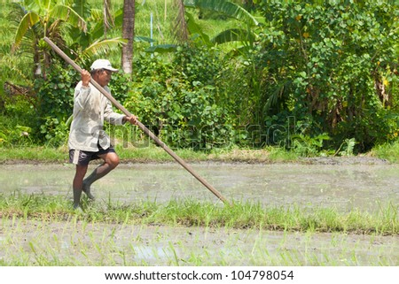 BALI - FEBRUARY 15. Farmer uses wooden tool to prepare paddy field on February 15, 2012 in Bali, Indonesia. Farmers typically plant Green Revolution rice varieties allowing 3 growing seasons yearly.