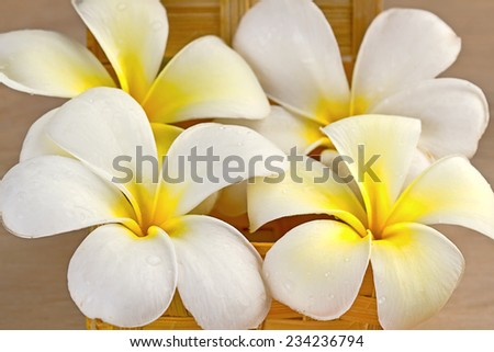 Bali flowers - stock photo