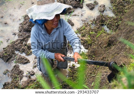 BALI, INDONESIA- JUNE 20, 2015: Balinese female farmer ploughing the rice field in Tegalalang rice terrace. Close-up image from the top