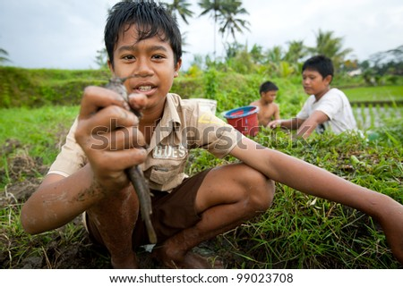 BALI, INDONESIA - MARCH 31: Unidentified poor children catch small fish in a ditch near a rice field on March 31, 2012 on Bali. Daily caloric intake per capita in Indonesia is 2891 kcal per person. - stock photo