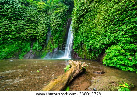 Bali, Indonesia. Old tree in the water near Munduk waterfall - stock photo